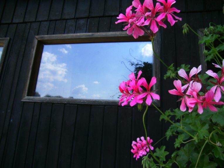 Pelargonium peltatum and  window with clouds