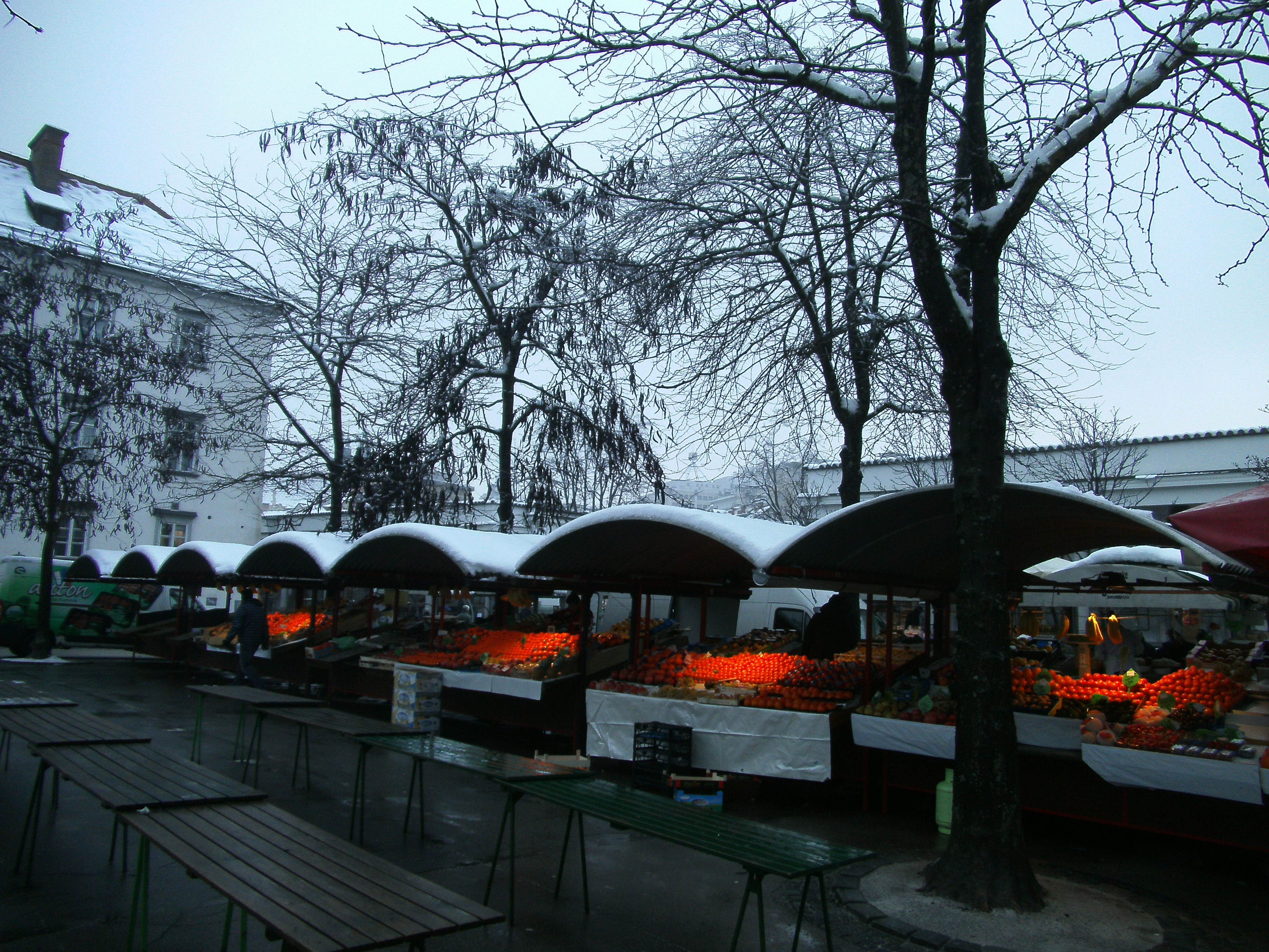 Oranges in winter morning