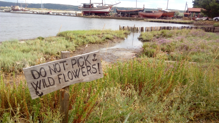 Do Not Pick Wild Flowers  U2013 My Botanical Garden
