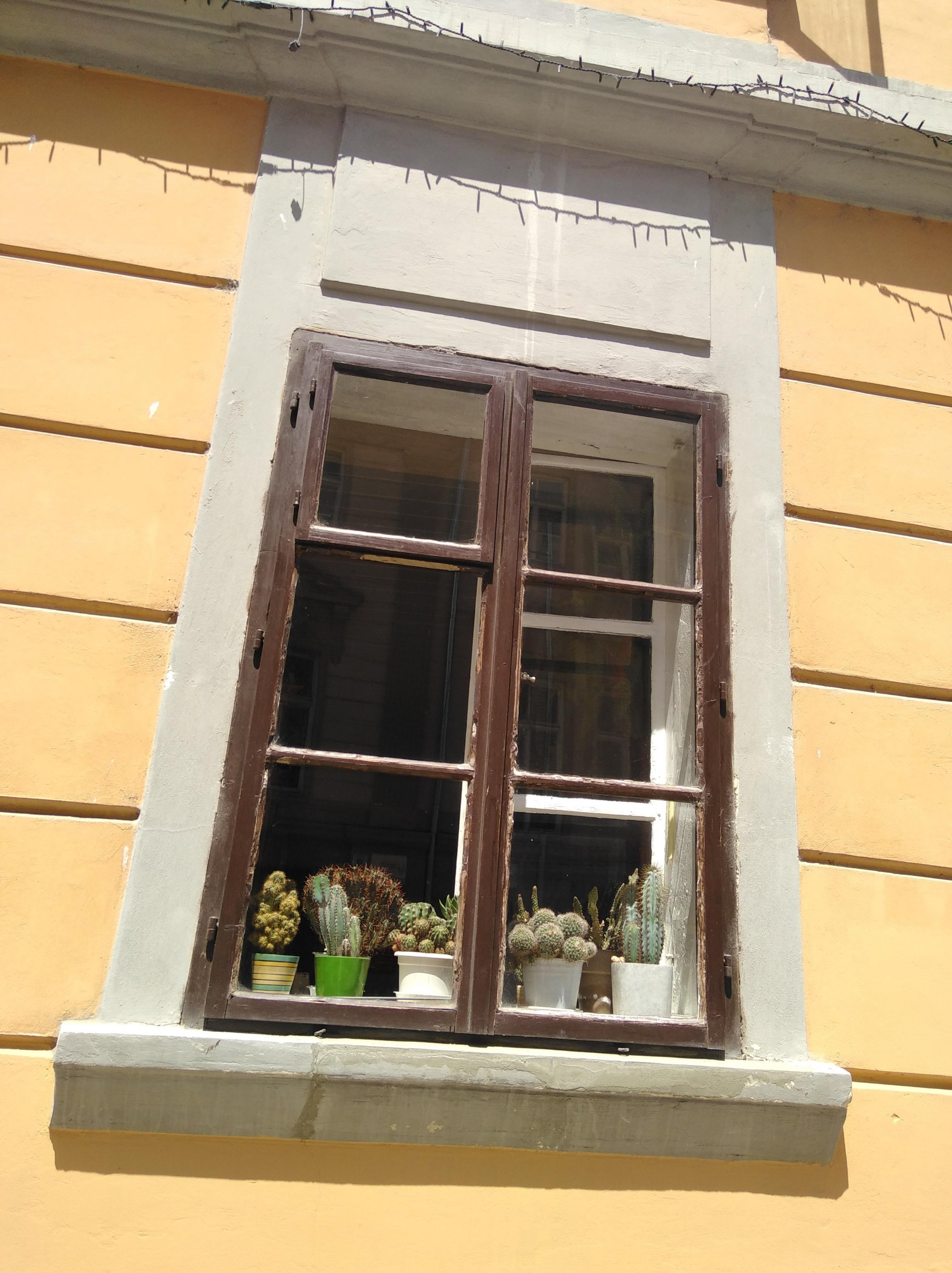 Collection of home grown cacti in the window of an old house window cactus garden photography in color by Slovenian artist Tamara Jare