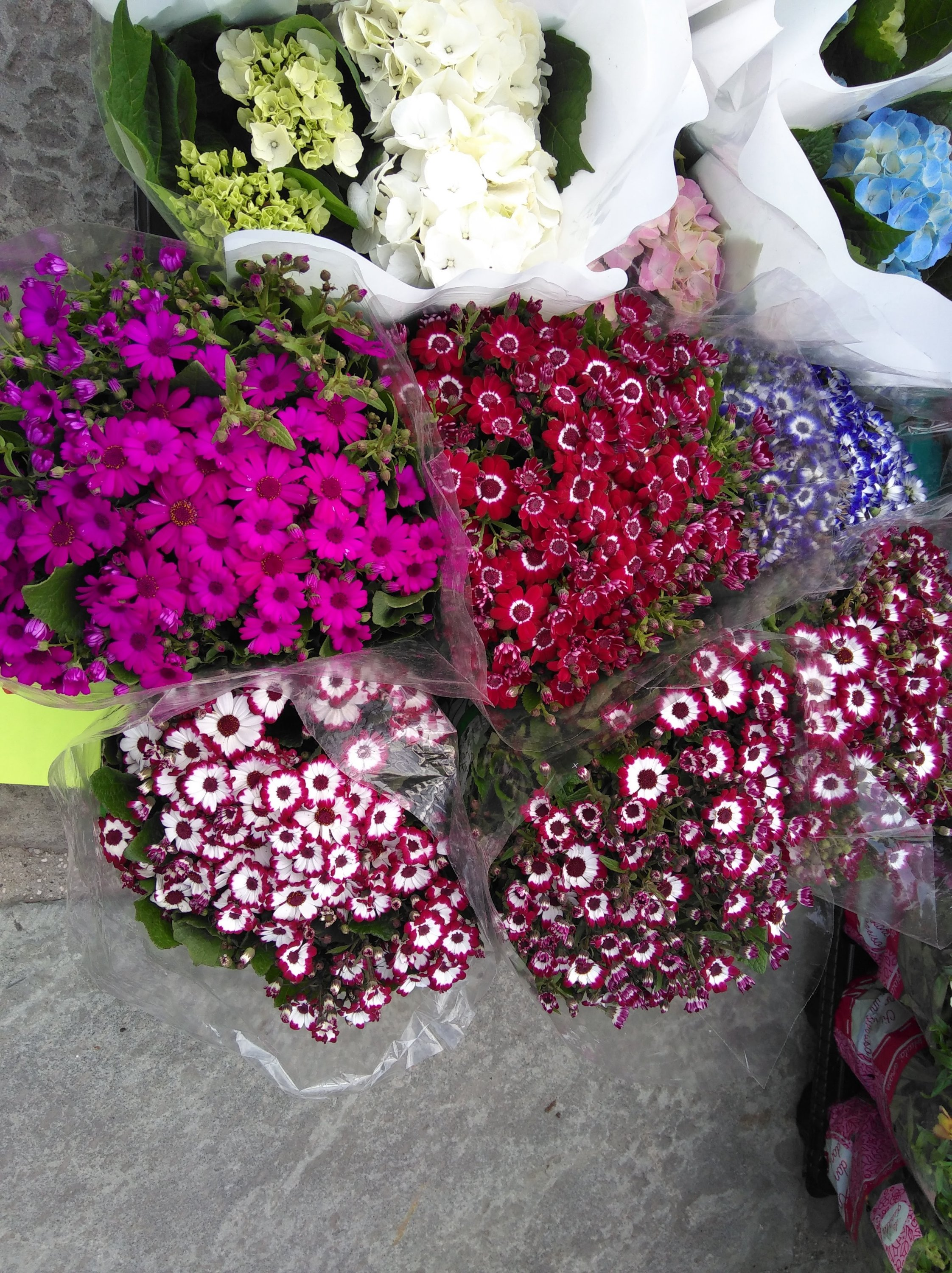 Tamara Jare Slovenian artist photography flower bouquets in white, red, pink and blue color on street market contemporary street photo Slovene art